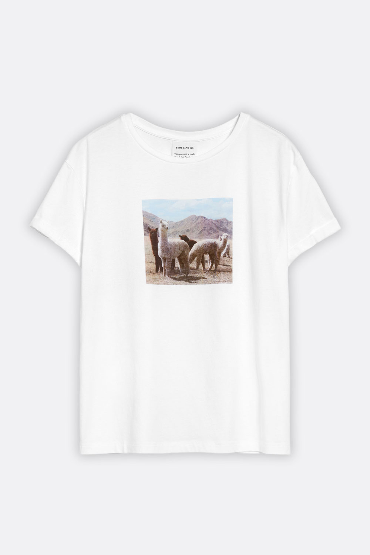 T-Shirt Alpakas