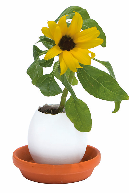 Eggling - Das blühende Ei